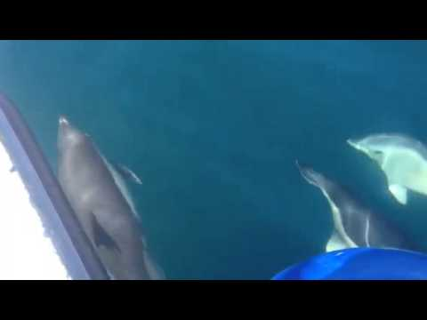 dolphins in newquay harbour