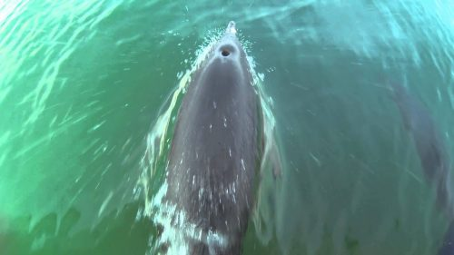 newquay dolphins december 2016